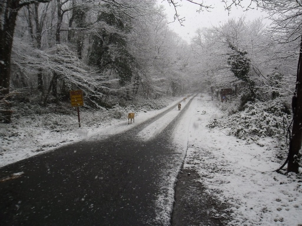 Belgrade Forest (Istanbul) under snow, January 2012 (photo 22 of 95)