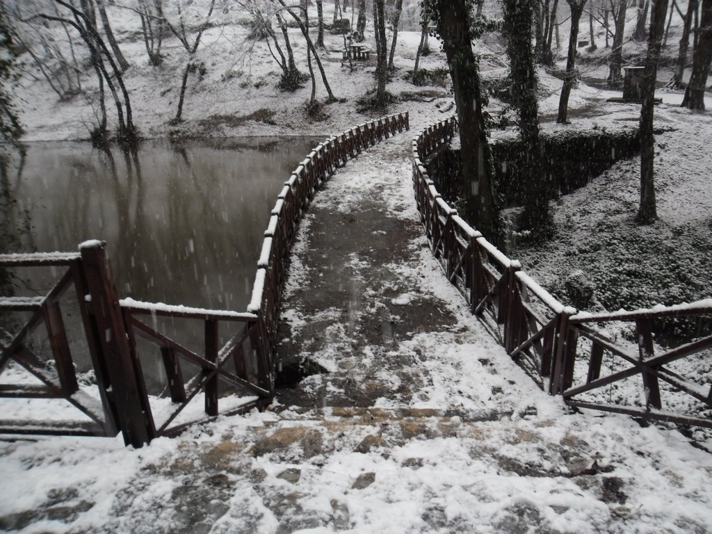 Belgrade Forest (Istanbul) under snow, January 2012 (photo 72 of 95)