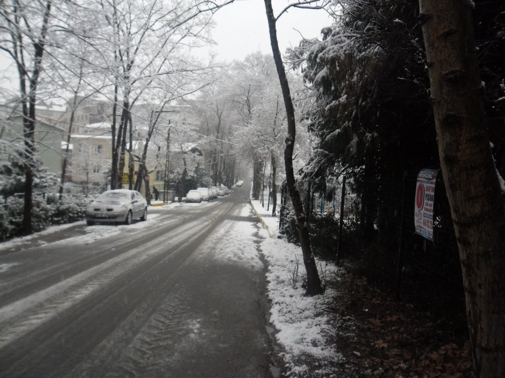 Belgrade Forest (Istanbul) under snow, January 2012 (photo 83 of 95)