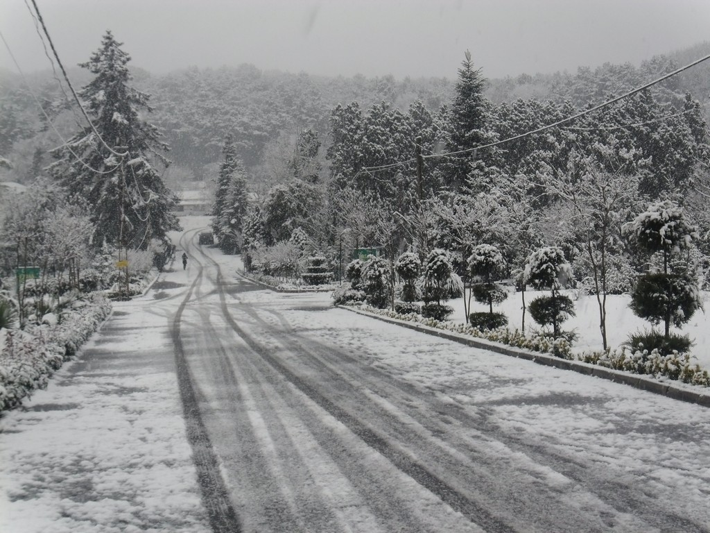 Belgrade Forest (Istanbul) under snow, January 2012 (photo 90 of 95)